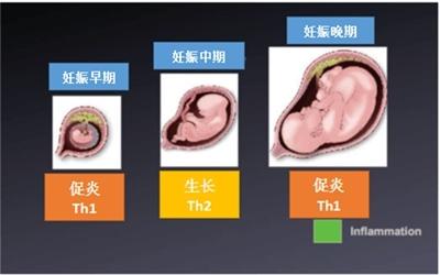 Th细胞因子